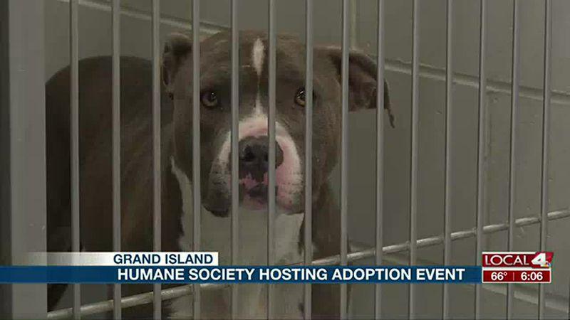 Central Nebraska Humane Society hosts adoption event