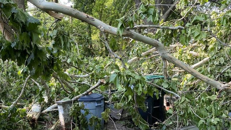 The storm late Friday and into early Saturday, July 10, 2021, blew down several trees across...