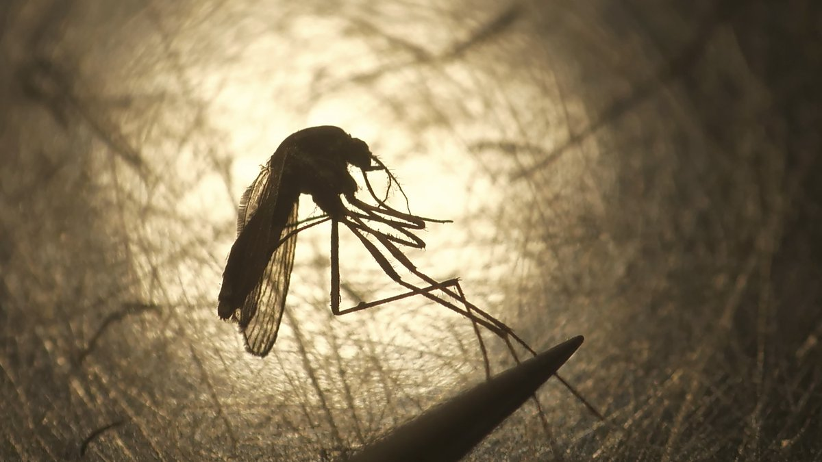 File - In this Aug. 26, 2019, file photo, Salt Lake City Mosquito Abatement District biologist...