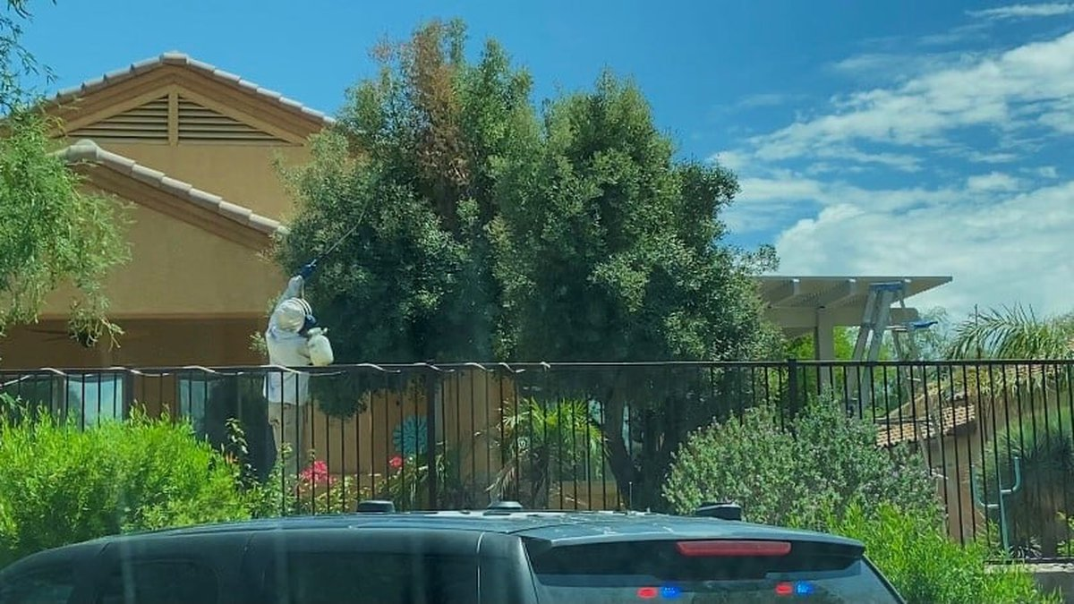 One person is dead, and others injured after a massive bee swarm in Arizona.