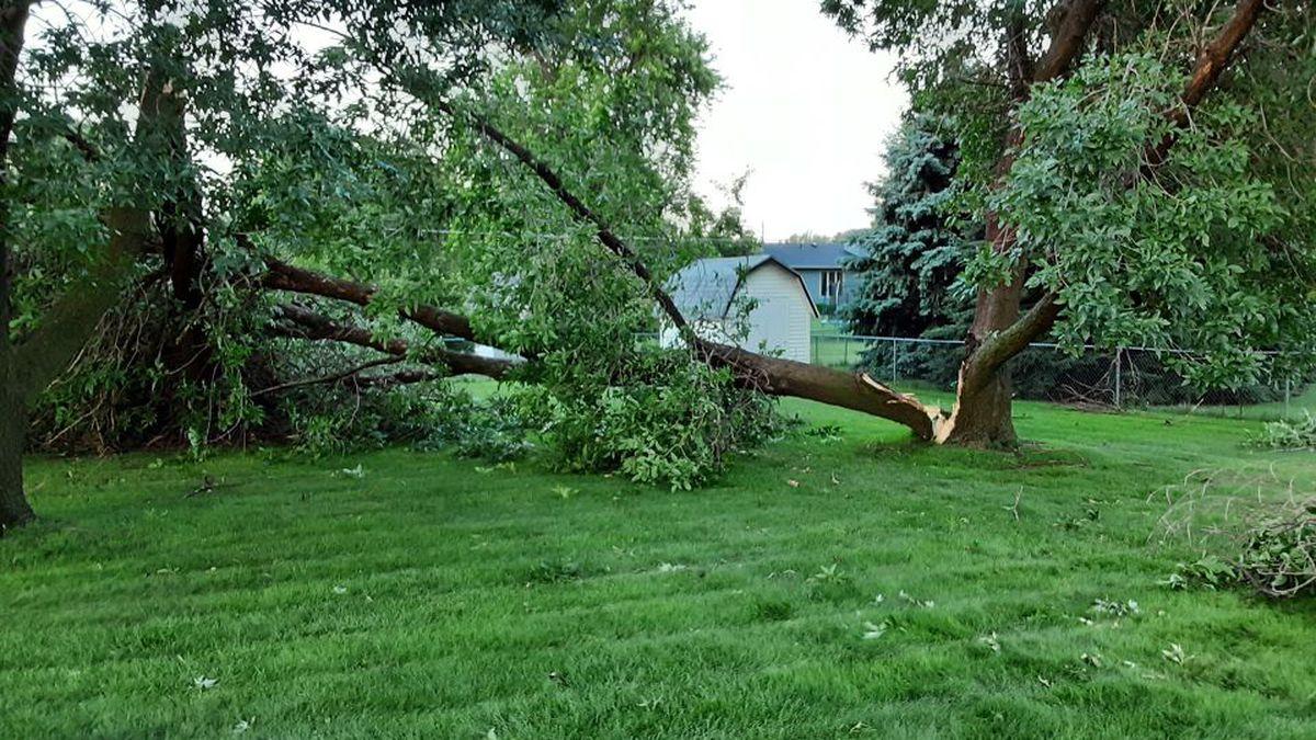 Broke and down trees litter a backyard in Grand Island