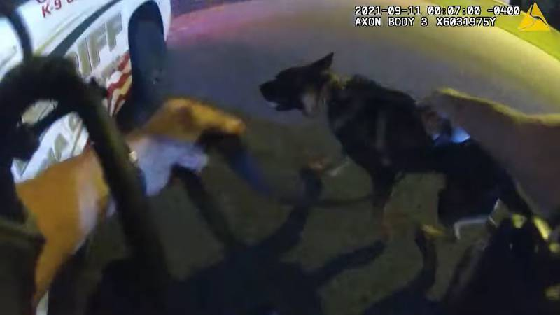 A deputy's body camera video showed the moment one K-9 was shot while law enforcement tried to...