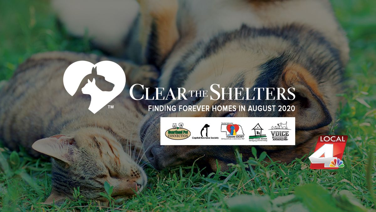 Local4 and 5 local animals shelters so far have adopted out nearly 100 animals.