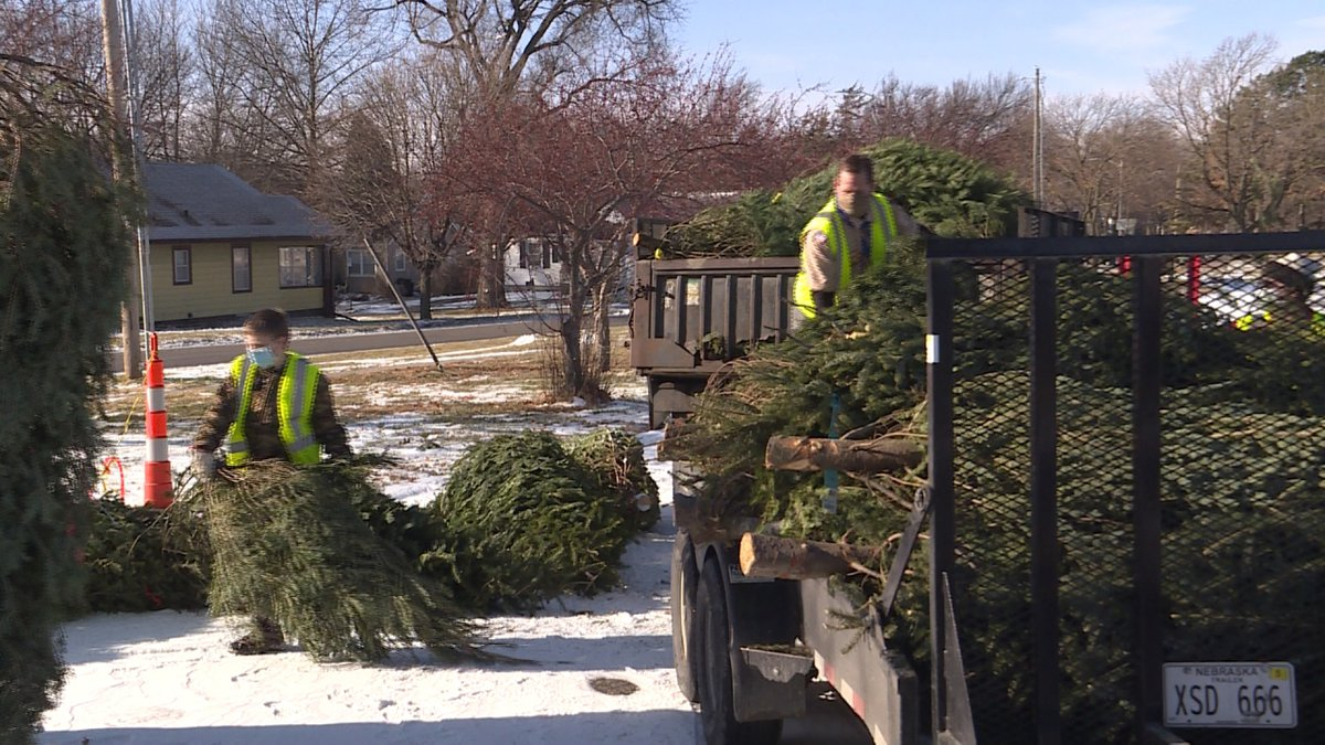 Starting Saturday, Lincoln's Boy Scouts Troop 8 is picking up unused Christmas trees from local...