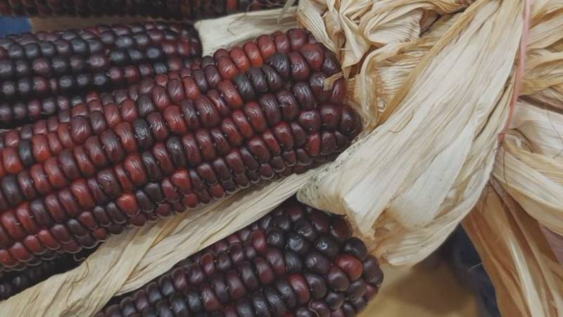 Native corn delivered to the Pawnee Nation of Oklahoma during an event at Central Community...