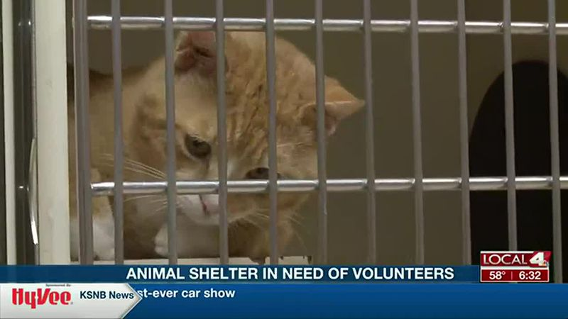 The shelter is in need of volunteers.