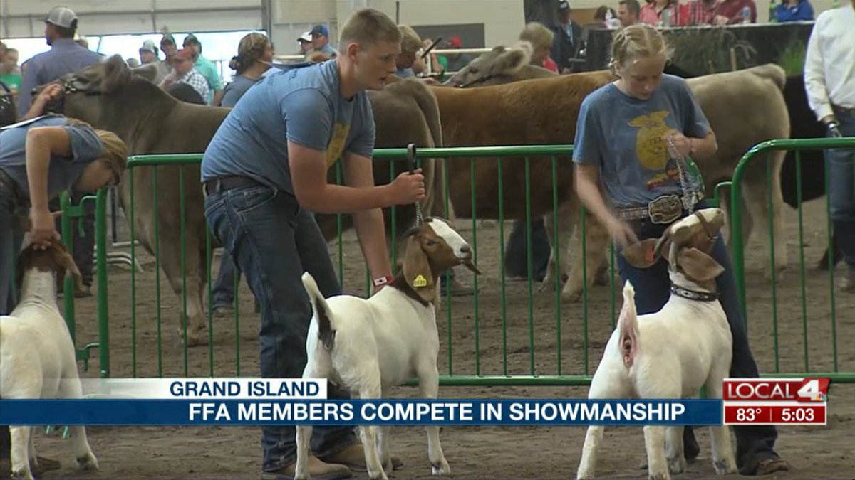FFA members compete in the goat showmanship competition Sunday at the Nebraska State Fair....