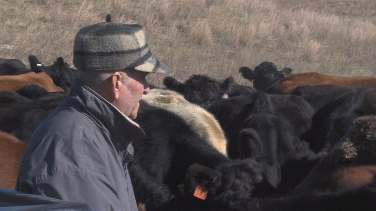 Tom McNeil watches his cattle eating food he hauled out for them. (Credit: Alicia Naspretto, KSNB)
