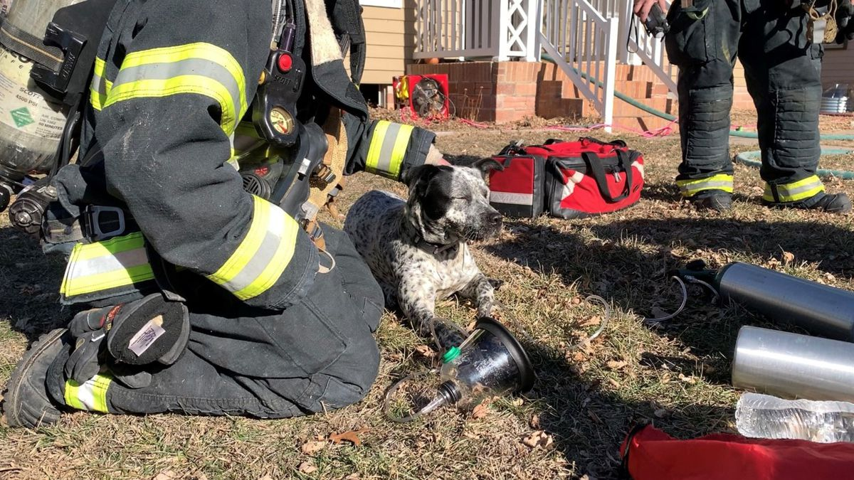 Hastings Fire and Rescue saved two dogs from a house fire just before noon on Tuesday.